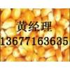 【饲料厂长年】求购玉米高梁DDGS大米次粉油糠等