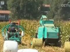 """""""粮改饲""""实施五年:农业结构调整让629个县种养效益提升"""