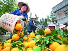 制度创新为农业带来勃勃生机